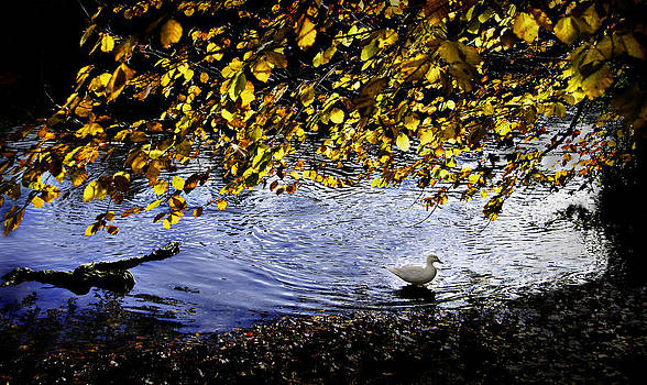Lonely duck by Henrik Petersen