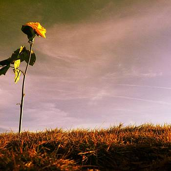 Lonely Flower  by Sam Newton
