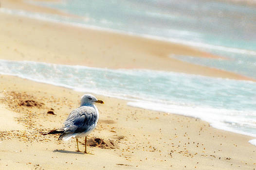 Lonely gull at the surf by Dick Wood