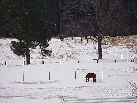 Lonely Horse by Kevin Croitz
