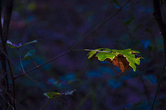 Lonely Leaves II by Anaz Art and Photography