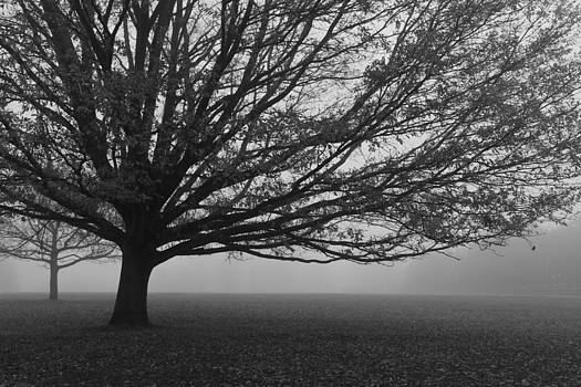Lonely Low Tree by Maj Seda
