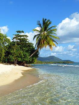Lonely Palmtree on Quiet Sunny Beach by BluedarkArt Lem