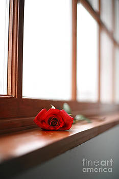 Lonely Rose by Sharon Dominick