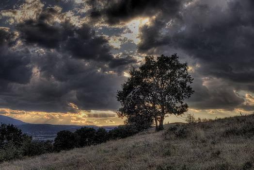 Lonely tree by Diana Dimitrova