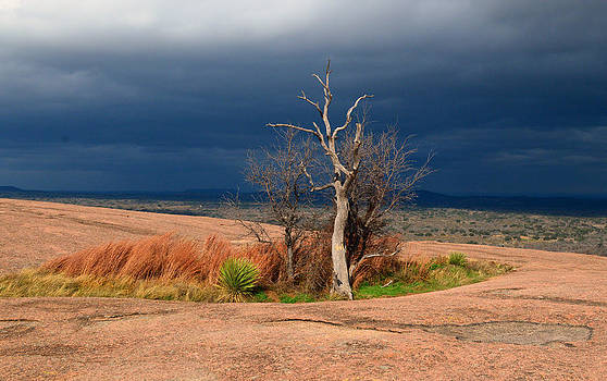 Lonely Tree by Heidi Pence