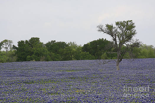 Lonely Tree In Bluebonnets by Jerry Bunger
