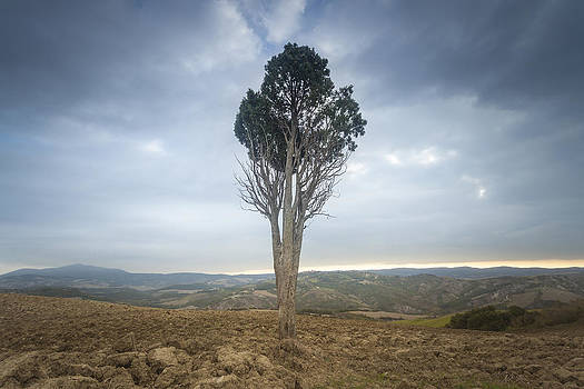 Lonely tree in Tuscany by Toma Bonciu