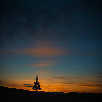 Lonely Tree by Jason KS Leung