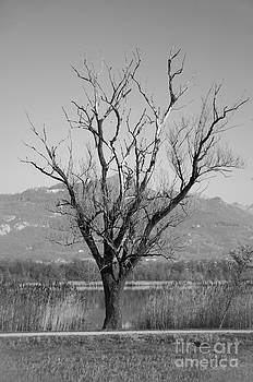 Lonely Tree by Leonardo Fanini