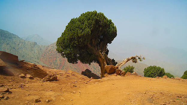 Lonely Tree by Mehdi Laraqui