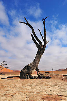 Lonely tree skeleton by Grobler Du Preez