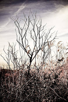 Lonely Wetlands Tree  by  Garwerks  Photography
