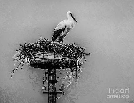 Algirdas Lukas - Lonely White Stork