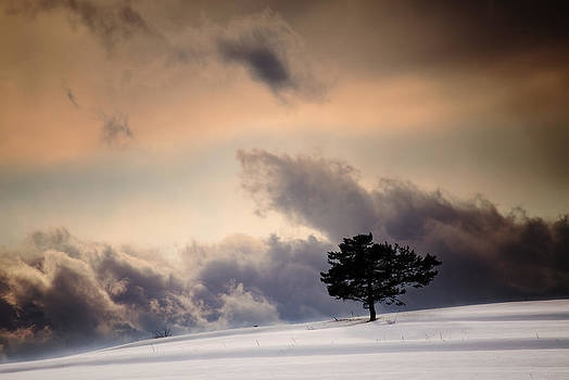 Lonely winter  by Svetoslav Sokolov