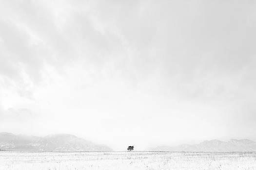 Lonesome Tree by D Scott Clark