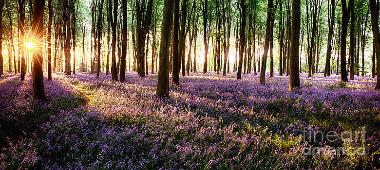 Simon Bratt Photography LRPS - Long shadows in bluebell woods