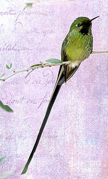 Sabrina L Ryan - Long Tailed Hummingbird