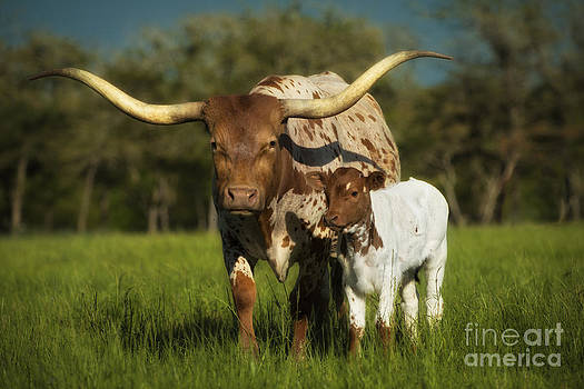 Longhorn and Calf by Richard Mason