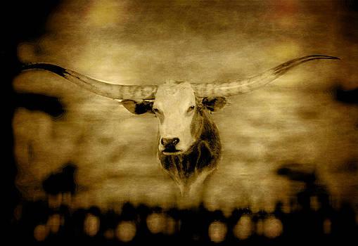Longhorn Bull by David Yocum