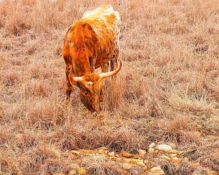 Longhorn by Mickey Harkins