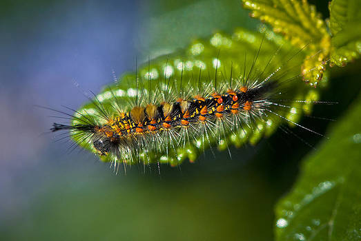 Look Down Caterpillar by Floyd Raymer
