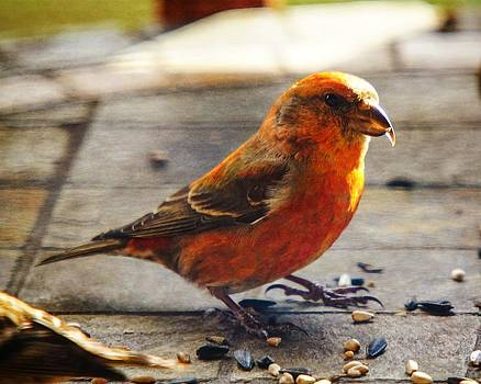 Look - I'm a Crossbill by Robert L Jackson