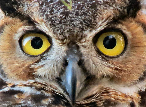 Look Into My Eyes by Kent Dunning