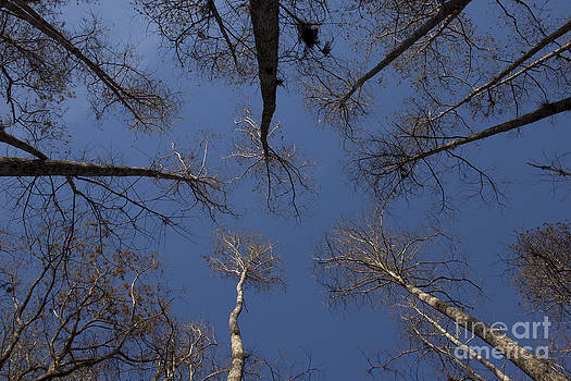 Look up by Meg Rousher