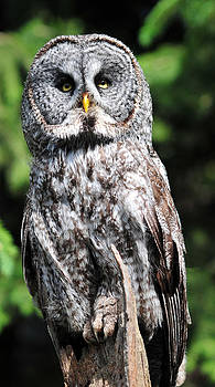 Looking At You  by Ken Wilson