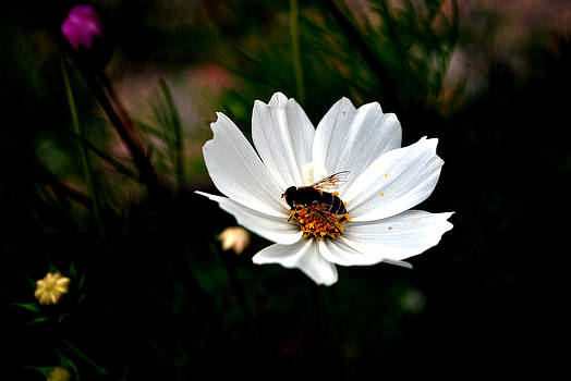 Looking For Nectar - Viator's Agonism by Vijinder Singh