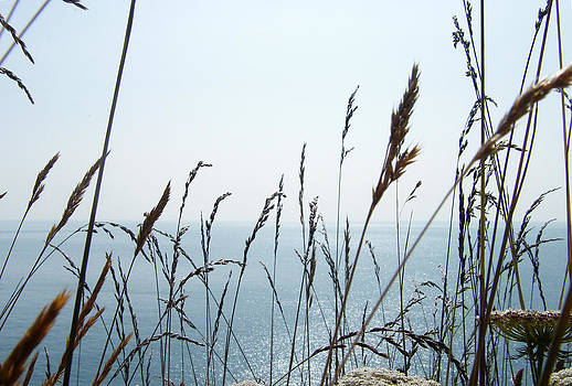 Looking Out To Sea Through The Tall Grass by Moya Moon