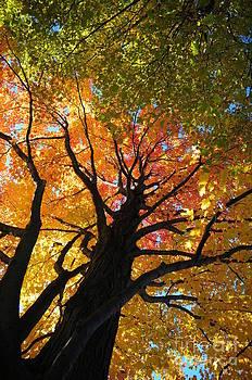 Looking Up 1 by Jennifer Englehardt