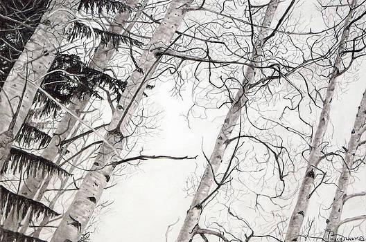 Looking Up 1 by Joyce Blank