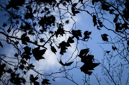 Heather Applegate - Looking Up