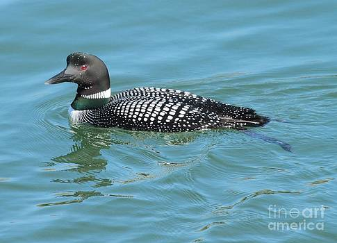 Loon by Debbie Stahre
