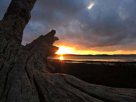 Los Osos Driftwood by Paul Foutz
