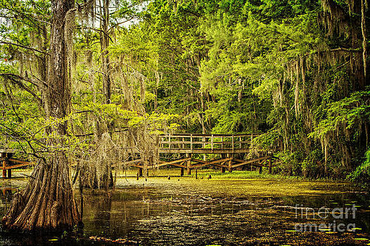 Tamyra Ayles - Lost Bridge on Caddo Lake
