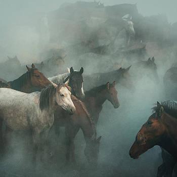 Lost Horses by H??seyin Ta??k??n
