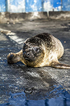 Lost Seal by Creative Mind Photography