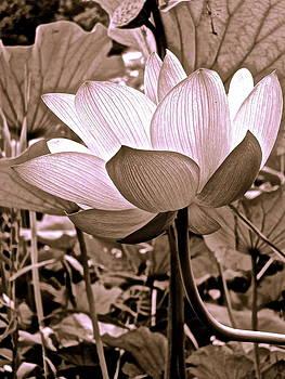 Larry Knipfing - Lotus Heaven - 104