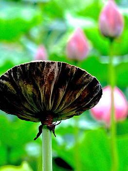 Lotus Heaven - 110 by Larry Knipfing