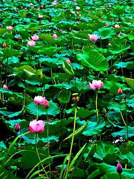 Lotus Heaven - 131 by Larry Knipfing