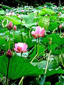 Lotus Heaven - 132 by Larry Knipfing