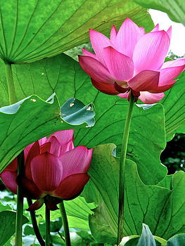 Larry Knipfing - Lotus Heaven - 31