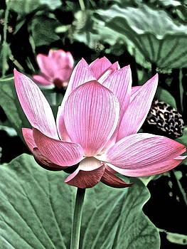 Larry Knipfing - Lotus Heaven - 47