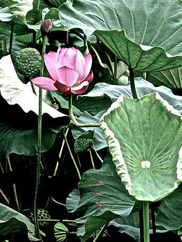Larry Knipfing - Lotus Heaven - 49