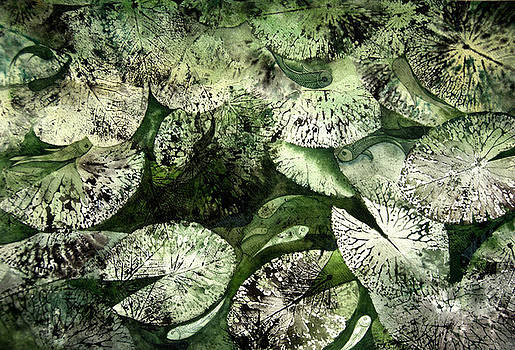 Lotus Leaves And Fish by Sucheta Misra
