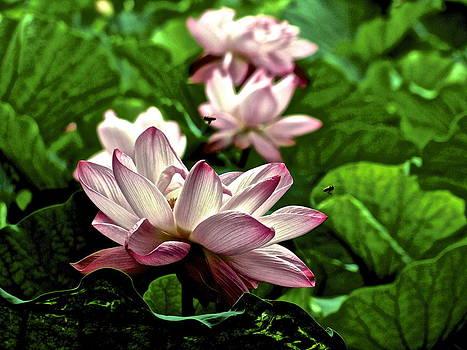 Larry Knipfing - Lotus Life - 8