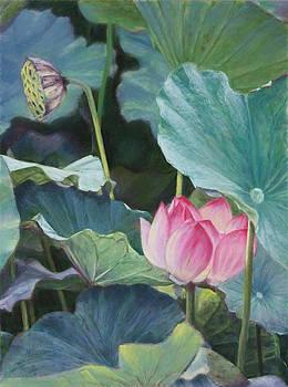 Lotus by Nancy Yang